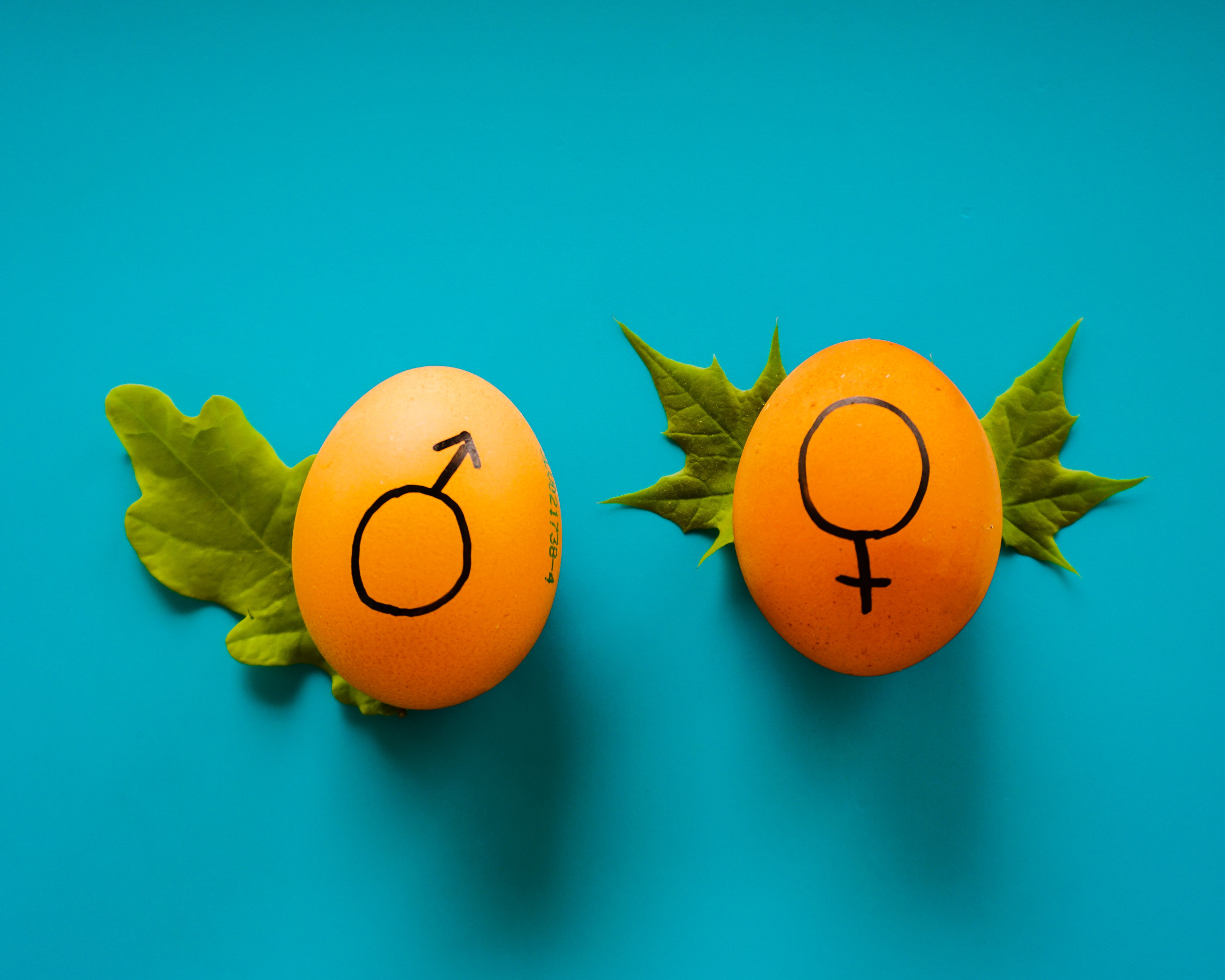 Two eggs with painted male and female gender symbols
