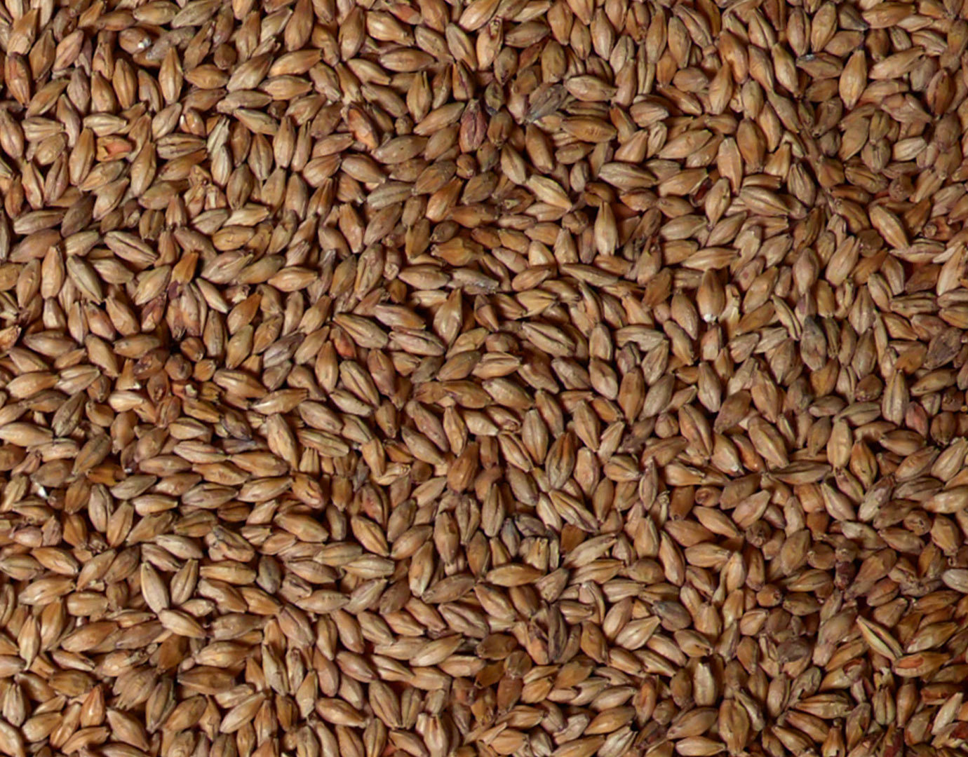 Product picture of Vienna Malt